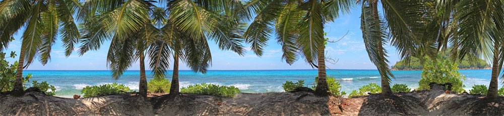 Panorama look of the Indian Ocean with multiple palmtrees in front of the sea