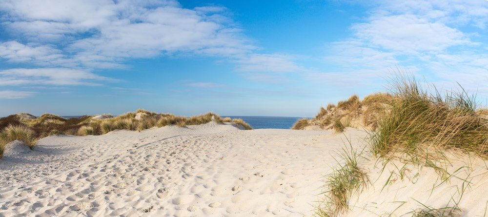 Panorama of Dutch dunes