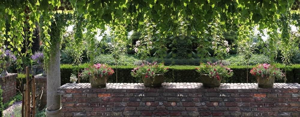 Panoramic view of ivy and some flowerpots