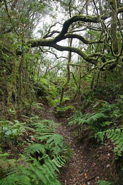 Backyard Jungle Tropical Landscapes : Tropical rainforest
