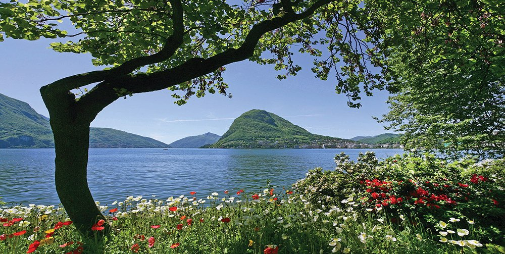 View on lake and mountains with white and red flowers in front