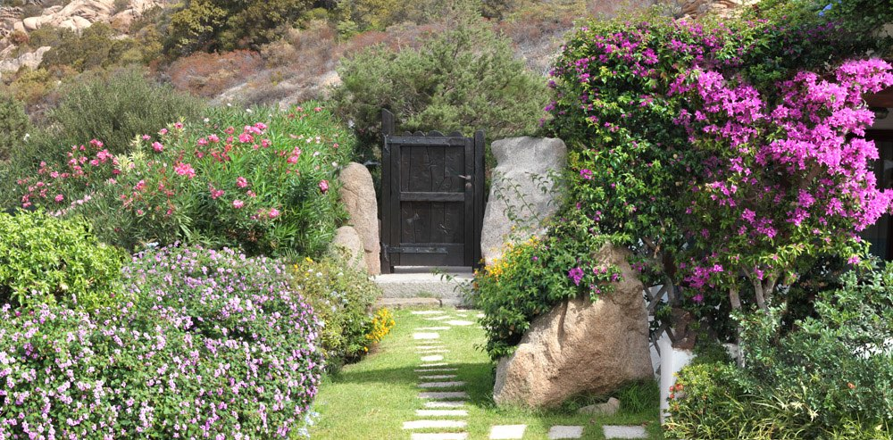 Garden with many flowers and a pathway to a wooden door